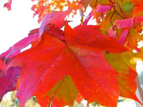 fall colours3